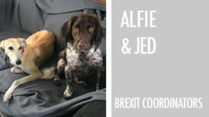 alfie and jed on sofa spaniel lurcher 2 dogs